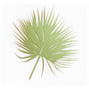 Tropical Frond